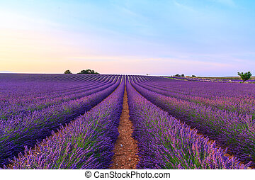 Stunning landscape with lavender field at sunset near...