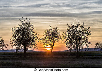 sunrise over the Taunus mountains with trees in foreground -...