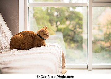 Lovely ginger cat on a sofa by the window, cozy home...