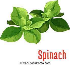 Spinach leaves vegetable icon Isolated leafy salad...
