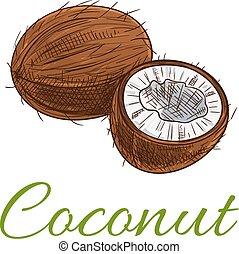Coconut fruit vector icon