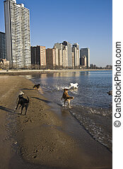 Dogs on the beach - Dogs playing on the beach in Chicago