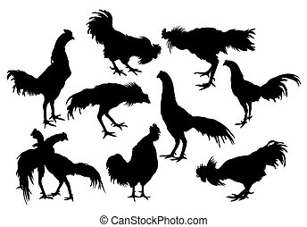 Silhouette of a variety of rooster