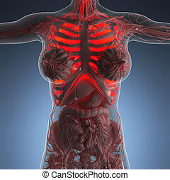 science anatomy of woman body with glow lungs