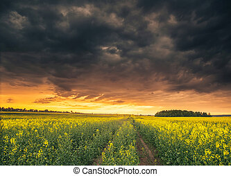 Beautiful morning moody sky above field with yellow flowers