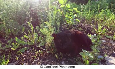Cat resting. Cat sits on the ground and basking in the sun....