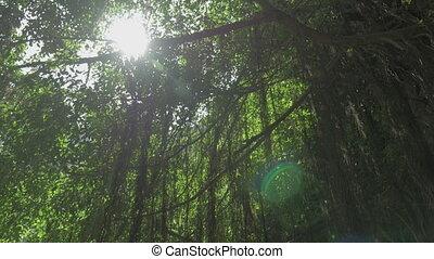 Small pagoda under banyan tree in Vietnam - Tilt shot of...