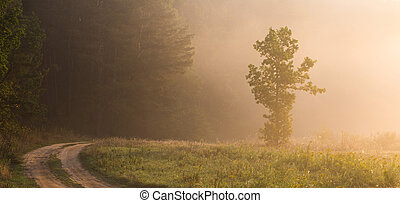 Warm summer morning on road with misty sunrise