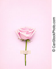 Rose with card.