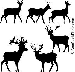 deer and roe silhouettes on the white background.