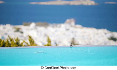 Cute small bird on the edge of an infinity pool. View from the poolside in luxury hotel at Mykonos, Greece, Europe