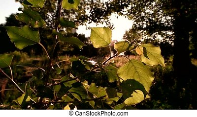 Tree leaves in sunlight. Nature and bright sun. Quiet and...