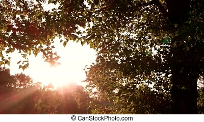 Tree and bright sun. View of nature at daytime. Quiet place...