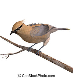 Cedar Waxwing. 3D rendering with clipping path and shadow...