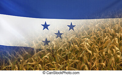 Honduras Nutrition Concept Corn field with fabric Flag -...