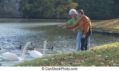 senior couple feeding swans