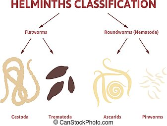 diagram depicting the class of worms - flat and round worms,...