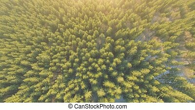 Aerial View of Pinetrees. 4k 30fps - 4k aerial footage fly...