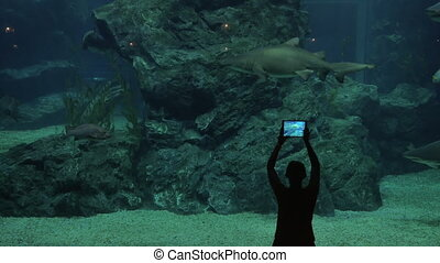 Woman in oceanarium with sharks - Woman looking at sharks...
