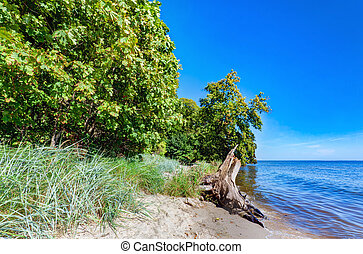 Coast of the Puck Bay, Baltic Sea in Poland. Trees hanging...