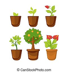 Pots plants with flowers and leaves set. Vector illustration.