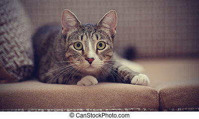 Striped cat on a sofa. - The domestic striped cat lies on a...