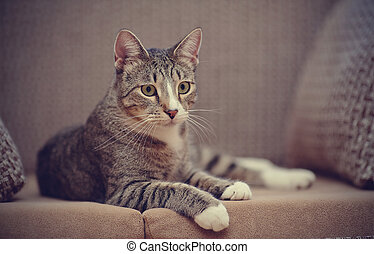 Striped cat on a sofa. - The striped cat lies on a sofa.