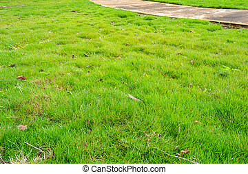 concrete walk way with small grasses - image of concrete...
