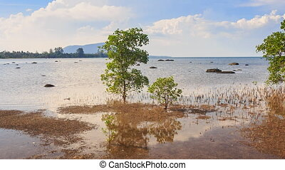 View of Trees Grass under High Tide against Coast Opposite -...