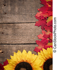 Old barnwood with colorful leaves - Old barn wood with...
