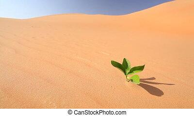 leaf in desert