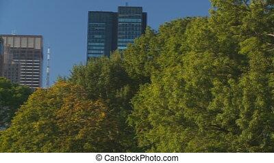 pan shot close trees skyscrapers part II - pan shot close...