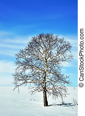 Winter landscape with a tree.