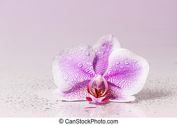 Pink orchid with dew and reflection Toned image