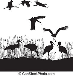 Storks in peat - black and white vector illustration of...
