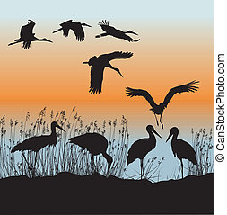 Storks vector - Vector illustration of storks on the...
