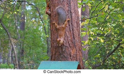 funny squirrel playing in a tree in the Park