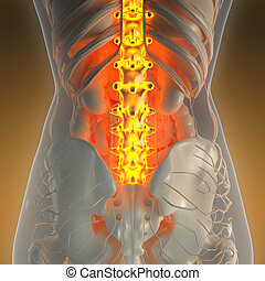 science anatomy of human body in x-ray with glow back bones