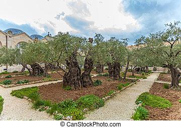 Gethsemane Garden at Mount of Olives, Jerusalem, Israel -...