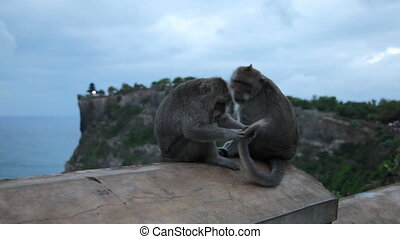Two monkeys at temple