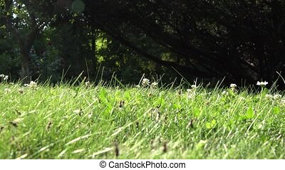 Ants with wings in grass walk and fly. Insect nest during...