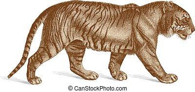 Tiger Vector Engraving vintage illustration - Highly...