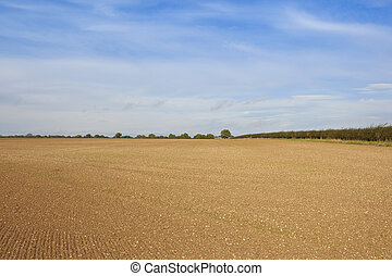 cultivated chalky field - a newly cultivated field prepared...