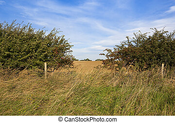 hedgerow gap and scenery - a hawthorn hedgerow with a gap...