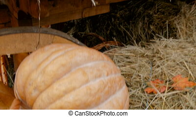 Beautiful pumpkin lie on a rural cart