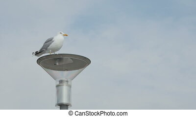 Seagull standing on top of a street lamp