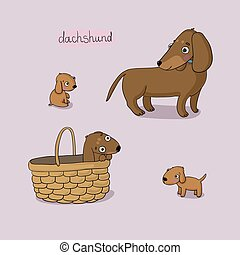 Set of cute dachshund illustration in different poses.