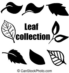 High quality original leaf collection isolated on white...