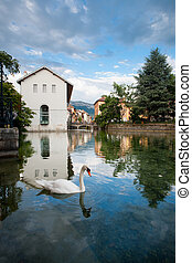 Swan Annecy Canal