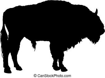 Buffalo. American Bison - Vector illustration of buffalo...
